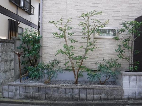 樹木剪定・植え替え